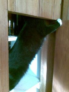 cat explores cupboard