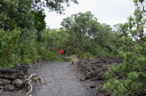 rangitoto island walking path