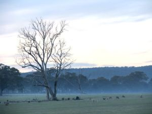 Morning mist at Cranford Cottage, Heathcote