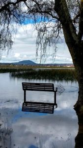 Marooned bench.