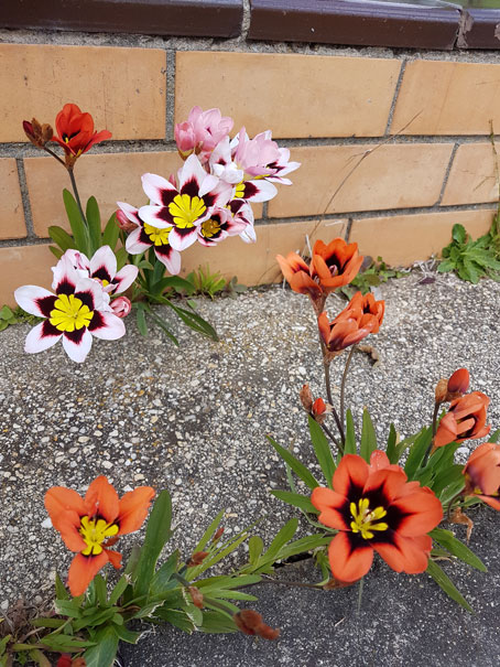 Flowers in the footpath